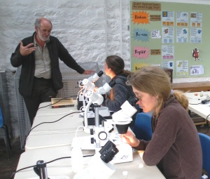 A spider identification workshop